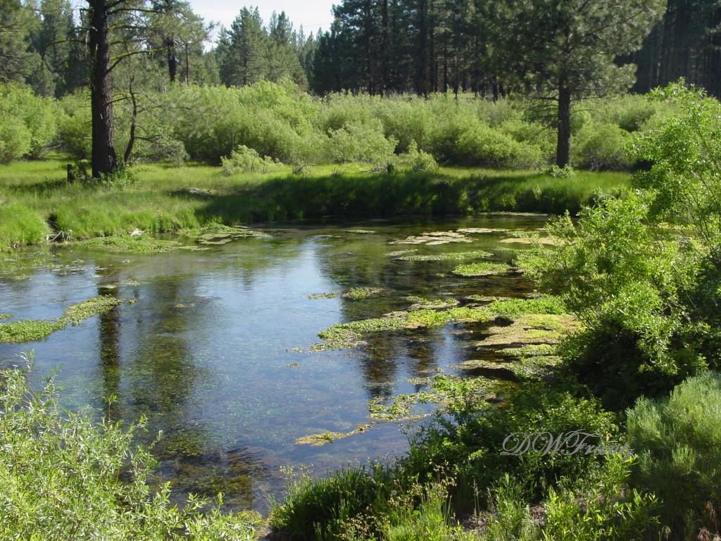 Hat Creek 5